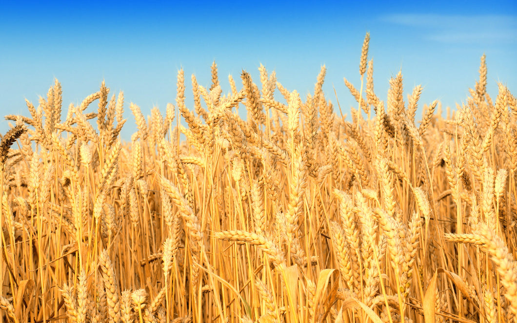 Wheat EU Data & Analysis - May 2015