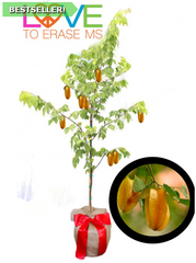 Carambola/Star Fruit Tree