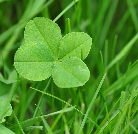 Top 20 Lucky Charms Attract Good Fortune And Positive Energy Luckybudmall