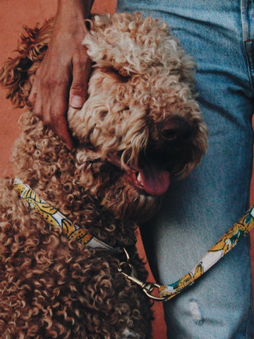 BEAST + BABE ENDLESS SUMMER BUCKLE COLLAR