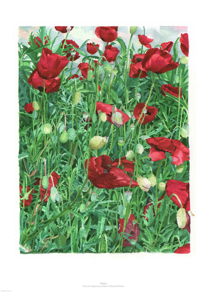 Fine art giclee print of poppies in a field. UK