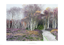 Heather and Silver Birches by Rosalind Forster