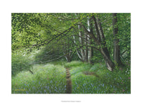 Woodland Path, Ashdale, Llangwm by Graham Brace
