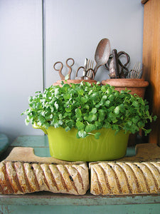 A beginner's guide to growing microgreens: Step-by-step growing guide
