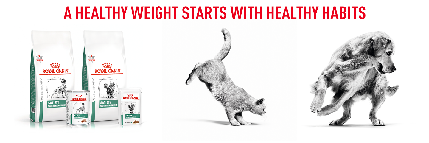 Royal Canin A Healthy Weight Starts With Healthy Habits