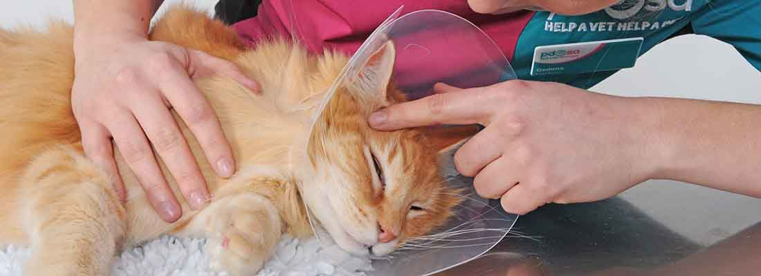 PDSA vet with a pet after operation