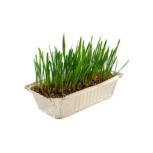 Pussy Lawn Natural Indoor Grass-Pussy Lawn-PDSA Pet & Gift Store