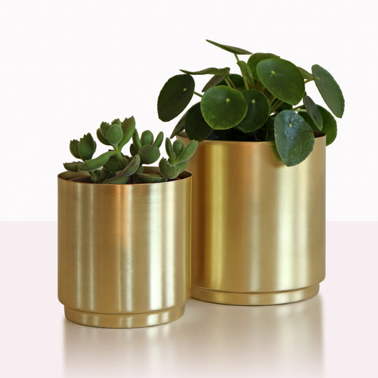 Specialty Plant Pots