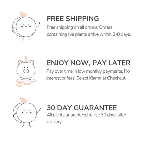 Free Shipping and Returns Within 30 Days