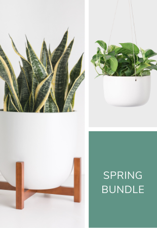 Spring Planter Bundle