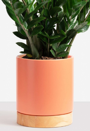Classic Ceramic Planter + Wood Base