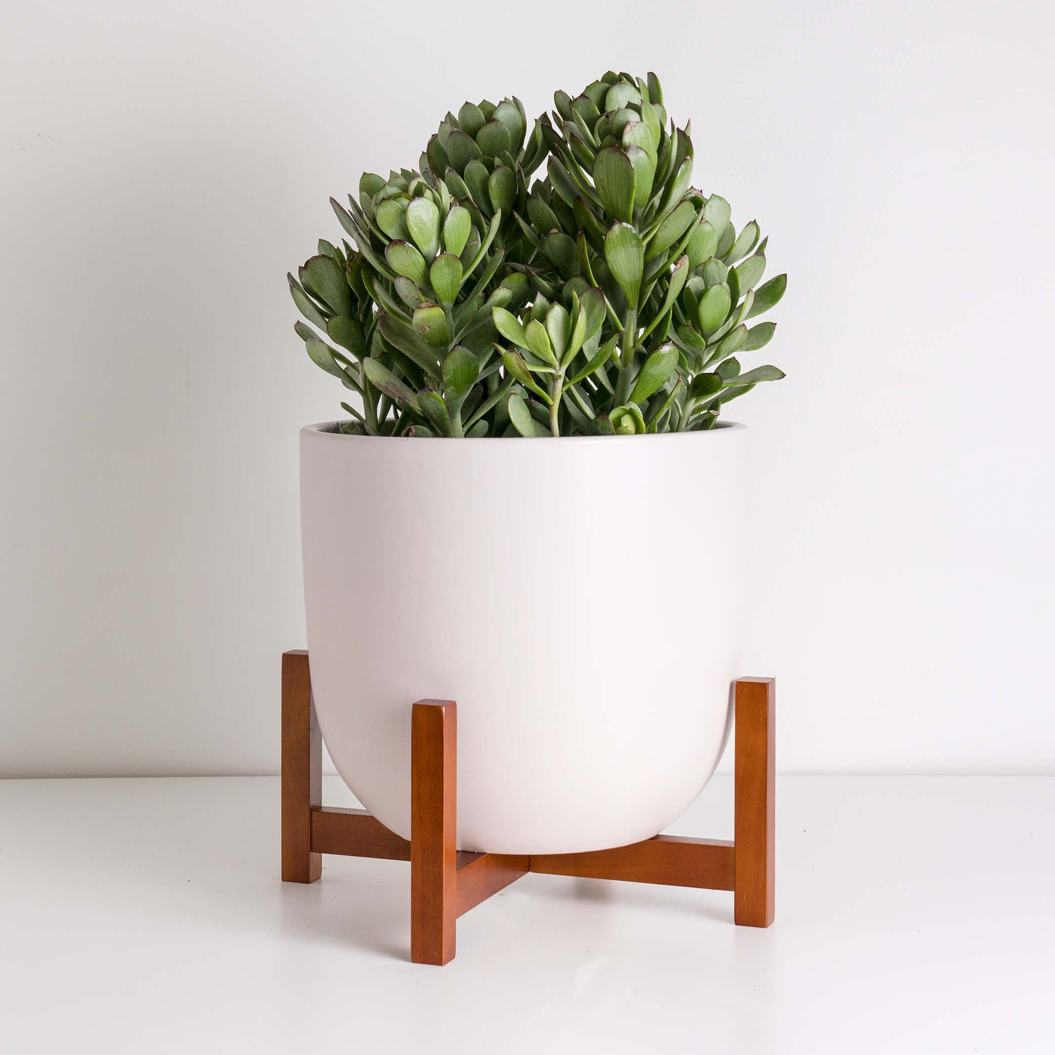 Black Friday Planter Bundle