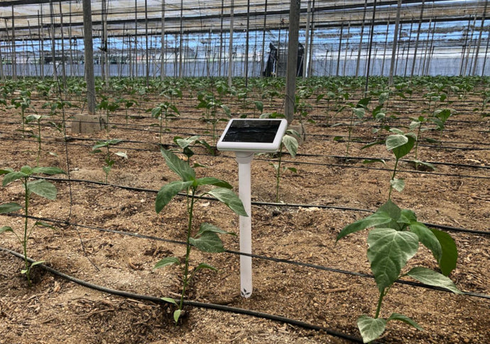 How Smart Agriculture Sensors Can Increase Yield and Prevent Crop Diseases