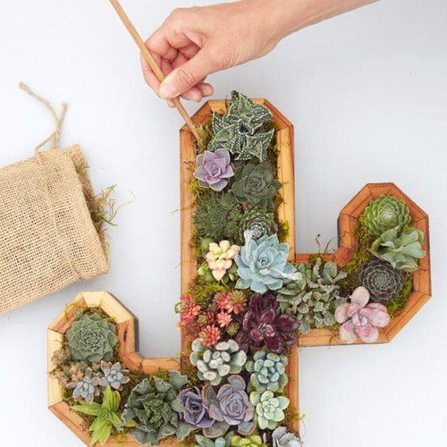 Workshop: Planting your Succulent Kit