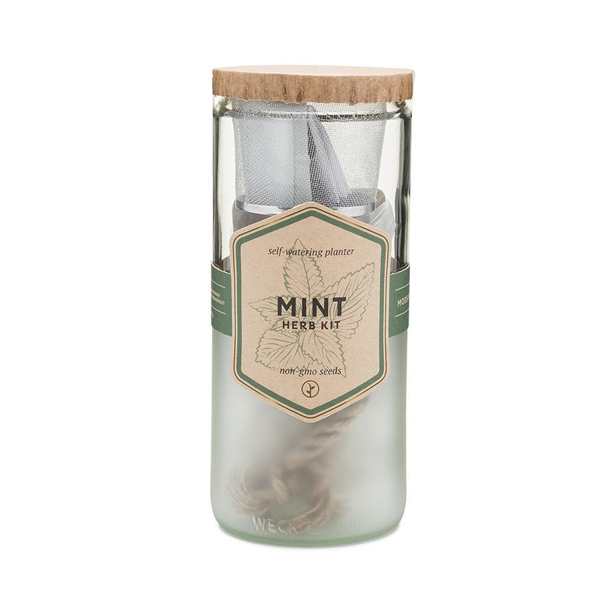 Eco Planter Kit - Mint