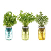 Garden Jars - Italian Herb Kit