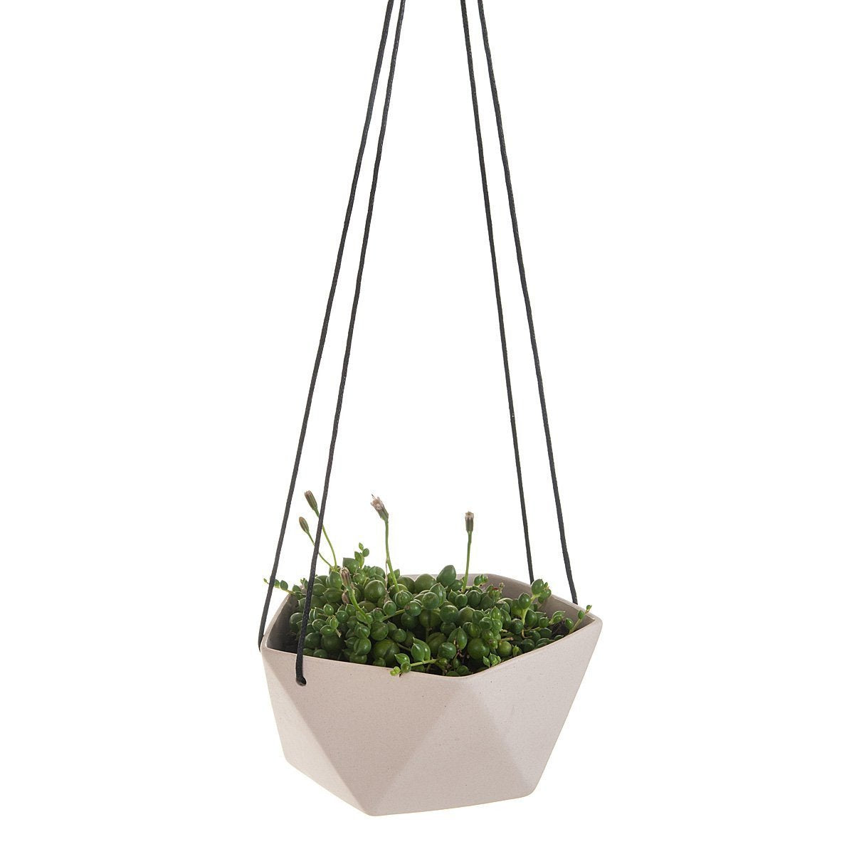 Geo Succulents Hanging Planter