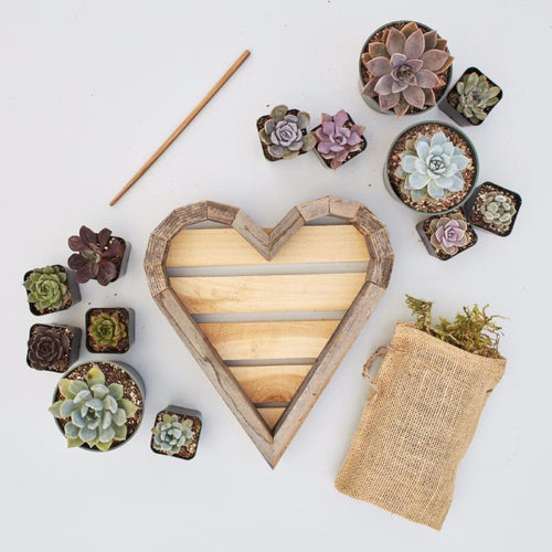 Redwood Succulent Heart Kit