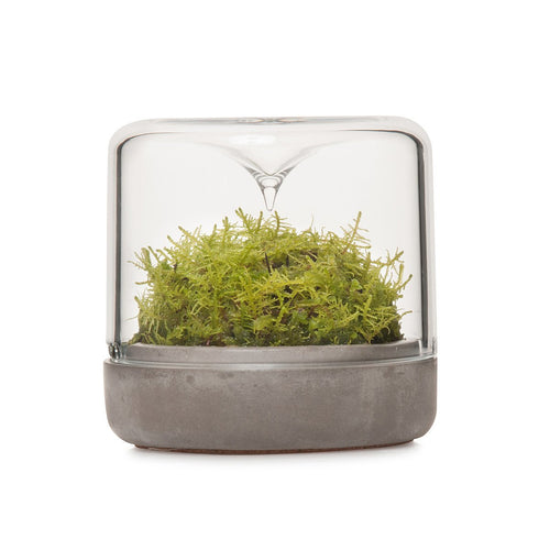 Small Sanctuary Rainforest Terrarium - Concrete