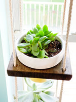 Mini Floating Plant Shelf