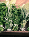 Indoor Herb Garden Tips