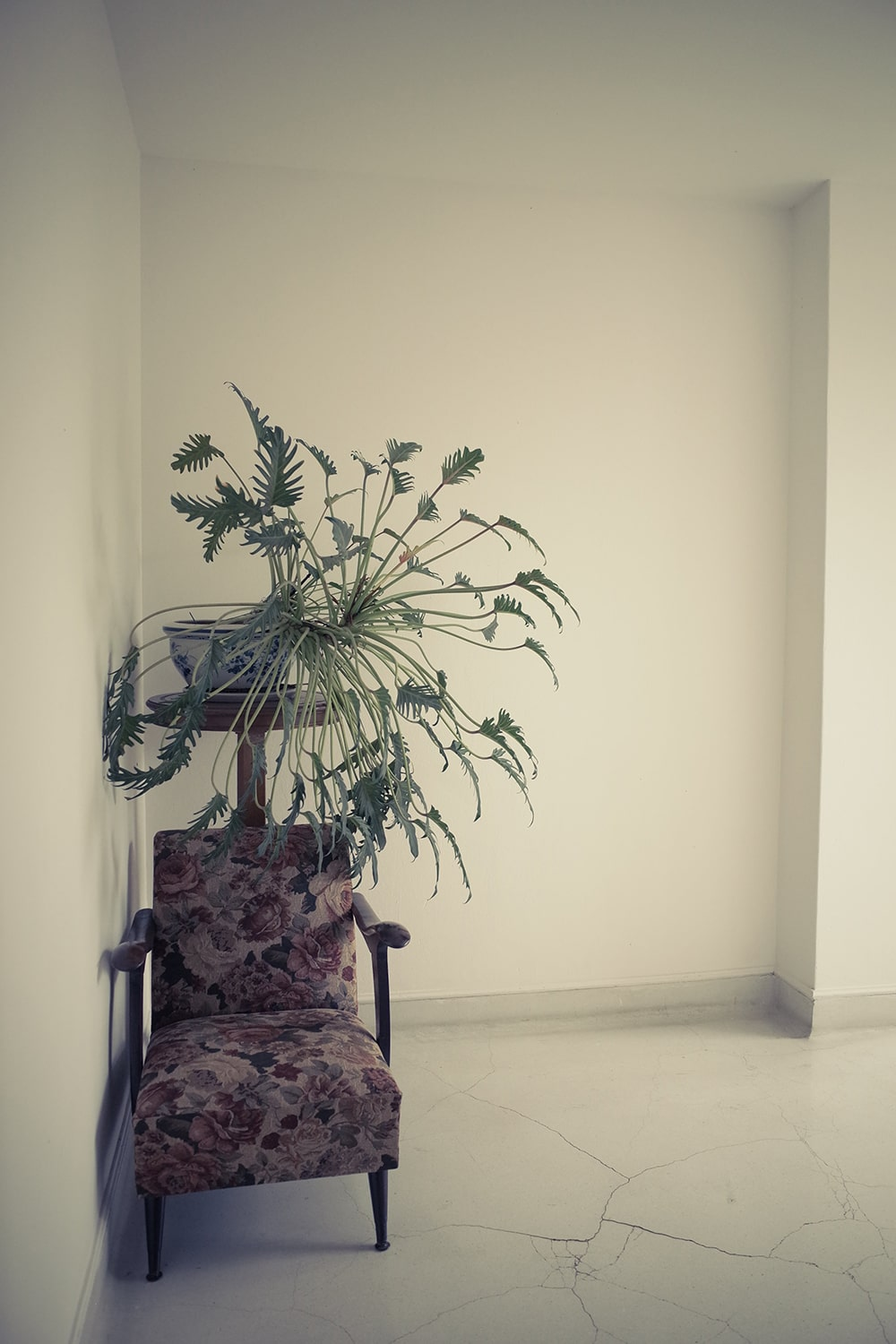 chair and plant by muska jewelry