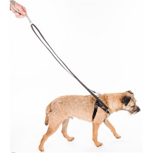 Load image into Gallery viewer, 2 Hounds Design 5 8 Patented Freedom No-Pull Harness Deluxe Training Package 14-35 lbs
