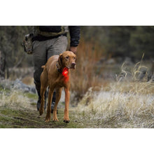 Load image into Gallery viewer, RUFFWEAR The Beacon™ Safety Light