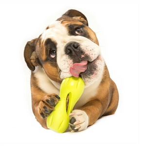 West Paw Qwizl - Eco Friendly Treat Toy