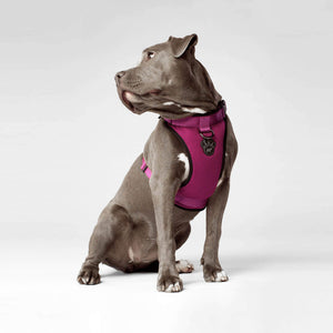 Canada Pooch Everything Harness PINK/RED/BLACK