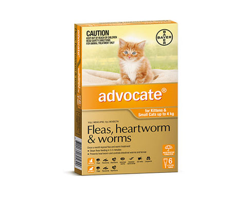 ADVOCATE CAT SML ORANGE 6PKT