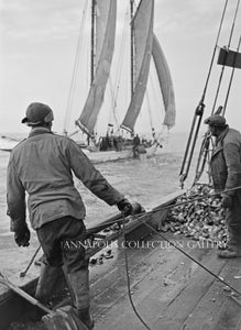 Watermen Dredging Oysters (circa 1950)