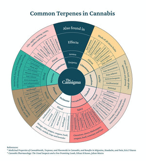 I Think It's Time We Talk (Terpenes).😎