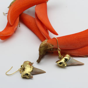 Gold dipped Shark's Tooth Fossil Earrings