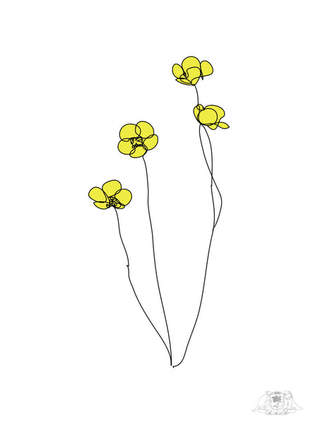 Buttercups line drawing