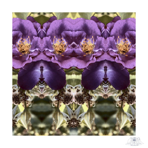 SQ Purple Roses