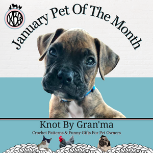 January Pet of the Month is Cav Photo is of a brown puppy boxer with a black muzzle on a white and teal background with the Knot By Gran'ma logo in the upper left hand corner and the Jauary Knot By Gran'ma banner on the bottom