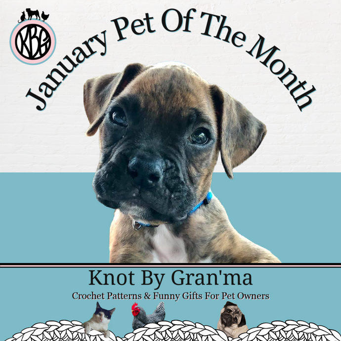 The Most Adorable Boxer Puppy Is Our January Pet Of The Month