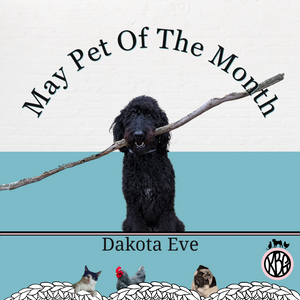 Dakota Eve Is The May Pet Of The Month At Knot By Gran'ma