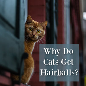 why do cats get hairballs orange cat graphic
