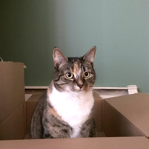 Nina the cat in a box