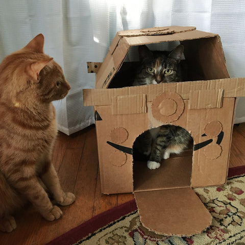 orange cat sitting next to and looking at a calico tabby cat sitting inside a cardboard cat house.