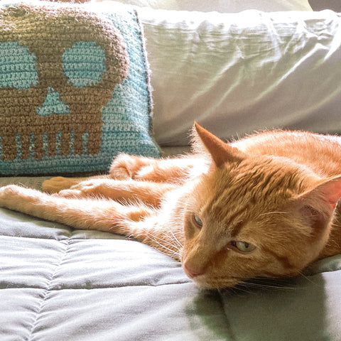 orange cat laying on a bed giving the camera the side eye. There's a turquoise crocheted pillow with a crocheted skull on it behind him.