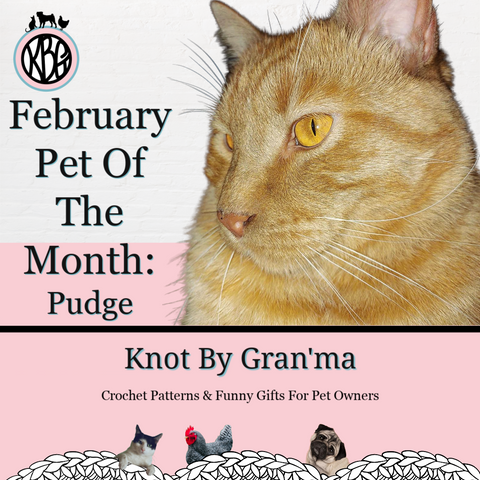 February Pet Of The Month Orange Tabby Cat named Pudge