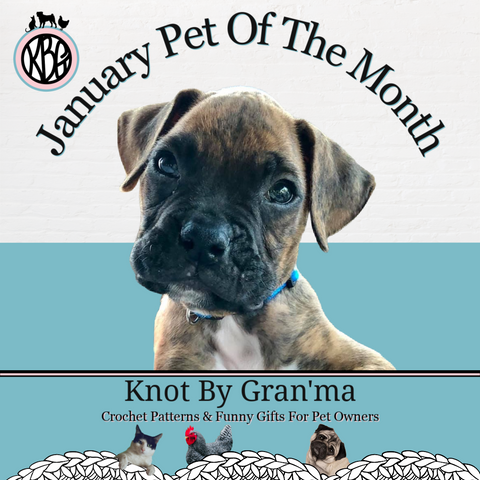 photo of a brown and black boxer puppy in the January Pet of the Month graphic