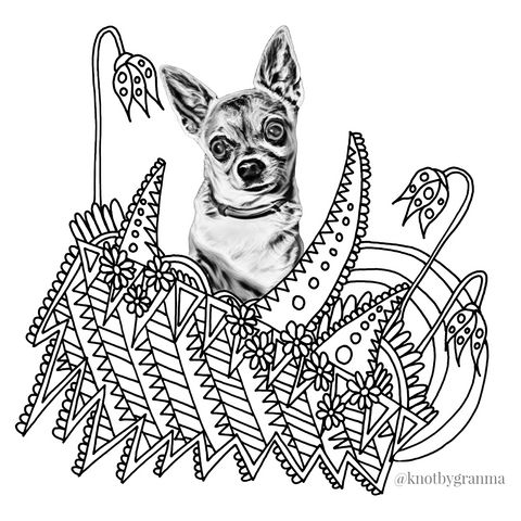 Coloring page of Thumper the Chihuahua Knot By Gran'ma March Pet Of The Month featuring a black and white version of Thumper and floral and geometric coloring areas