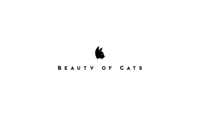 Beauty of Cats