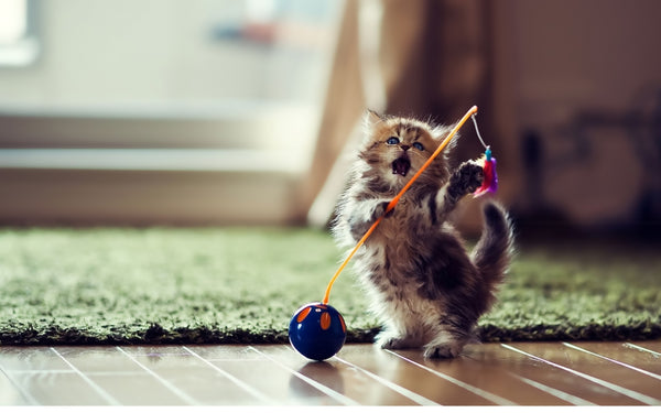 Extendable Colorful Wire Cat Toy