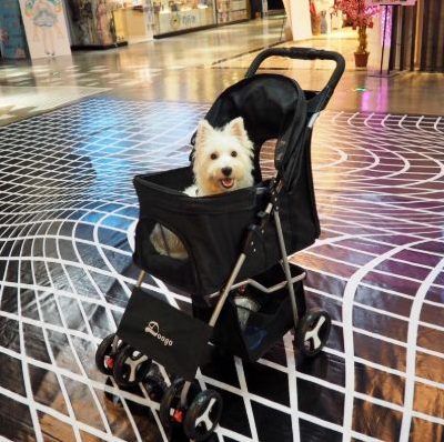 Best Deluxe Folding Dog & Cat Stroller