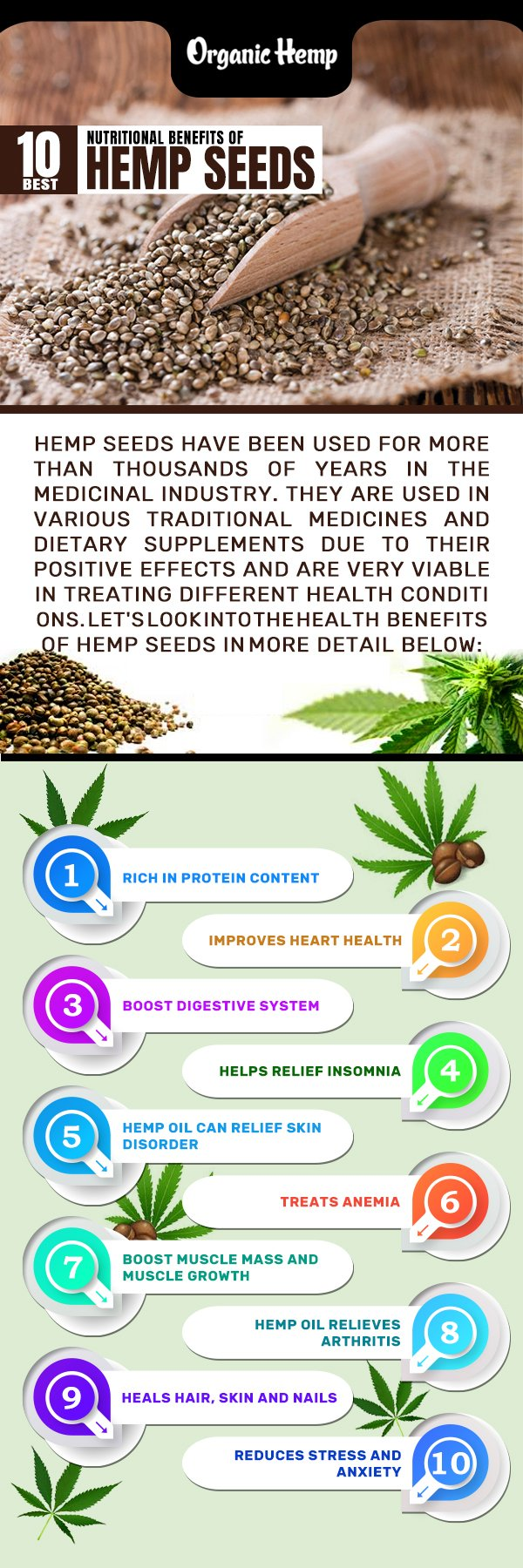 Everything You Should Know About Hemp Seeds Top 10 Nutritional Benefits The Open News